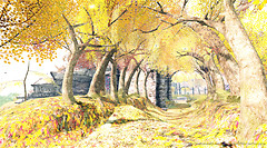 Aveiro Coast -yellow-