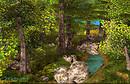 Scarlet Oak Grove Summer & Spring Creek