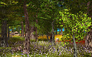 Scarlet Oak Grove Summer & Spring
