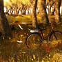 Autumn Imagination 1