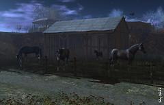 Horses at Frisland