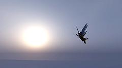 UP!  翼をさずかる