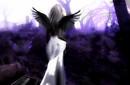 silente angel