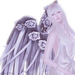 Angel of Rose_20150213