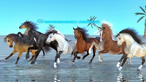 Run Wild, Run Free......