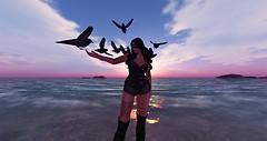 crows flight
