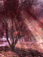 Sun Rays in Spring