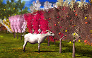 Animated Mesh Trees and Goat