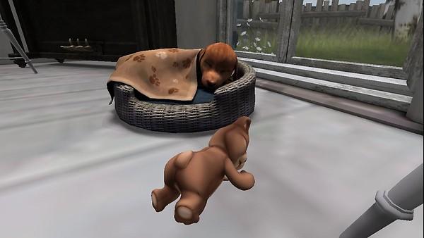 Dog and teddybear
