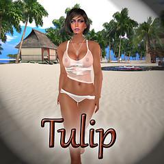 Tulip 1-2