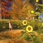 Harmony Garden Sunflowers