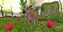 Garden of Eden Costa Amore Cow