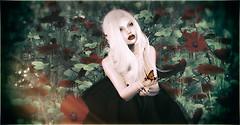 Poppy Pleasure Two2