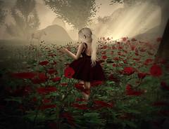 Poppy Pleasure Five
