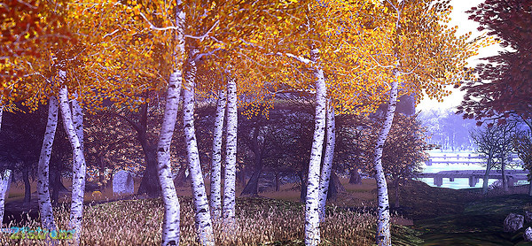 Aspen Grove in contemplating mood