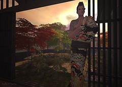 CCB7_TOMOTO_RH_002
