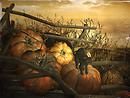 A Cat and Pumpkins