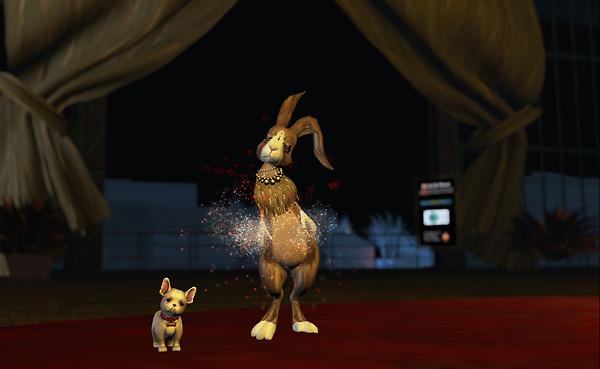 Bunny Hop Series