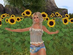 Patankar sunflowers