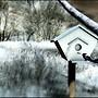 Mystical Fae Forest_birdhouse
