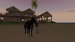My Horse and I on vacation