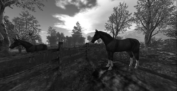Devins Eye_Horse Day 3