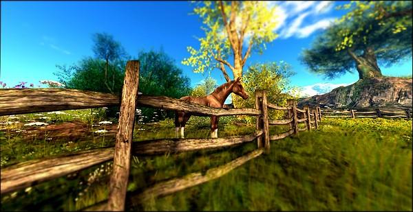 Devins Eye_Horse Day 1