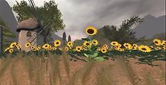 EriAdor Sunflowers