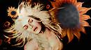 Clizia the SunFlower