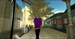 Lutz City_001