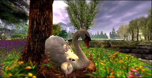 The Souls Spring Dream - mother swan