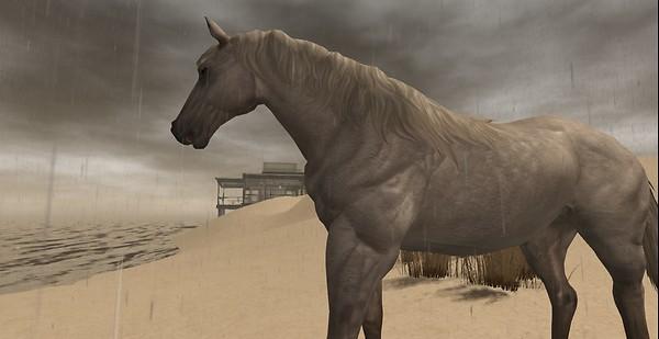 Sommergewitter horsesense