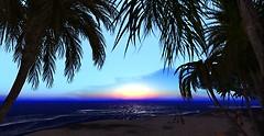Huntington Beach - California Dreamin sunset