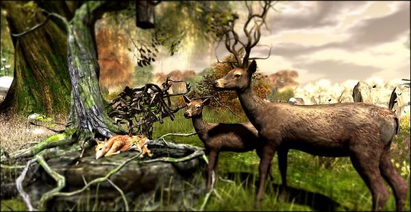 kindred spirit_deer