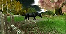Mimmo - daydream_black horse