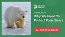 Đáp Án Và Giải Thích Why We Need To Protect Polar Bears   IELTS Reading Practice @ dol.vn - Học Tiếng Anh Tư Duy - Nội dung Free - Chất lượng Premium